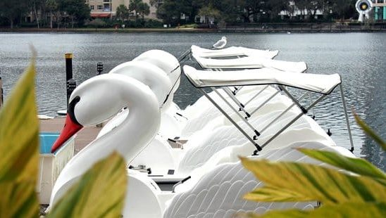 Swan Boats lined up ready for rentals