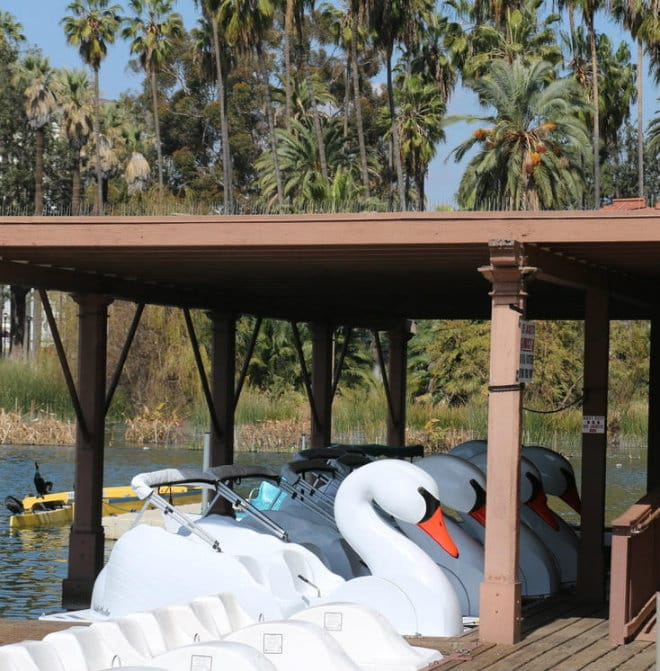 Swans docked at the Echo Park Boathouse | Photo by Martin Cox